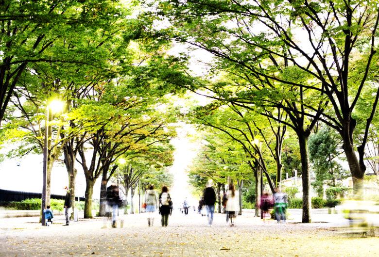 Tree lined avenue
