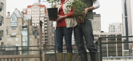 Couple gardening on roof